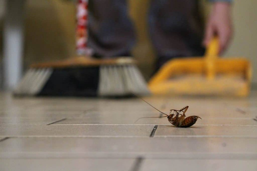 insectes dans maison