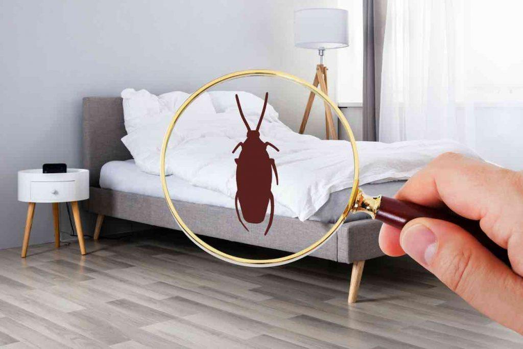insectes maison
